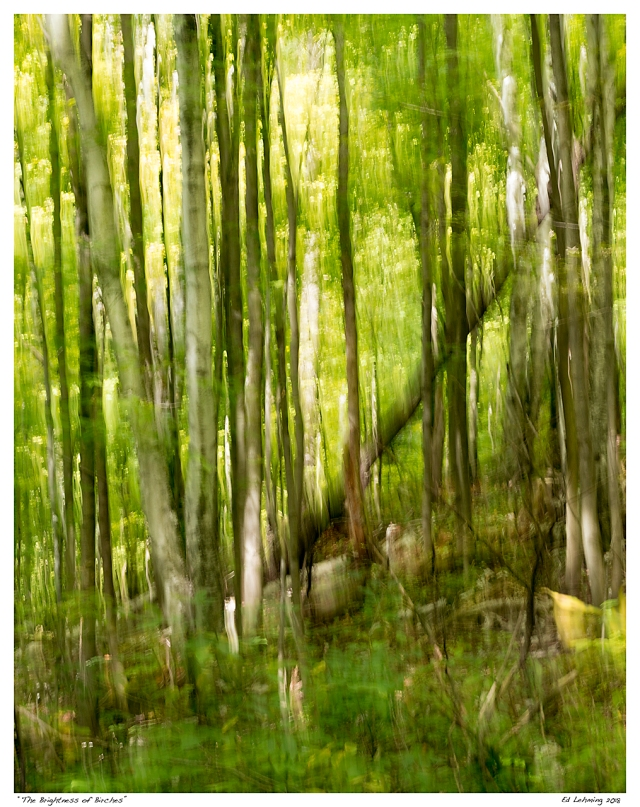 """The Brightness of Birches"""