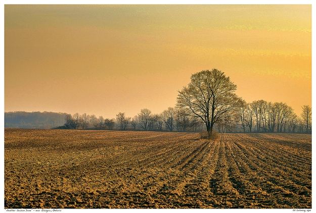 Lone Tree in Plowed Field near Glasgow