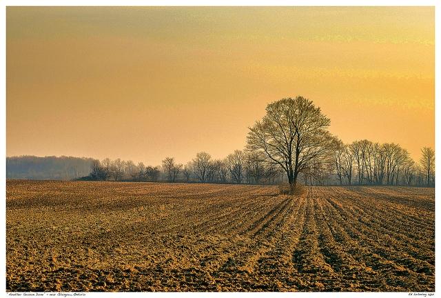 Lone Tree in Plowed Field near Glasgow