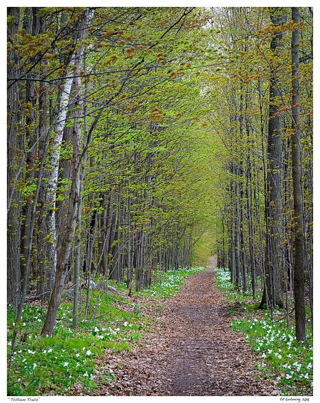 """""""Trillium Trails"""""""