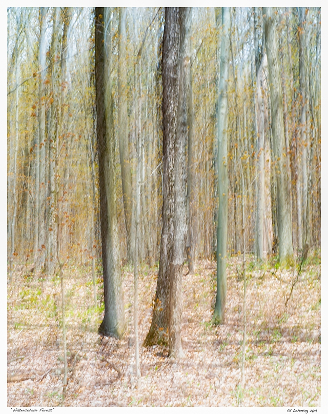 """""""Watercolour Forest"""""""