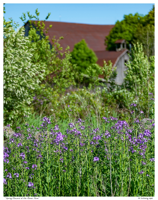 """Spring Flowers at the Ramer Farm"""