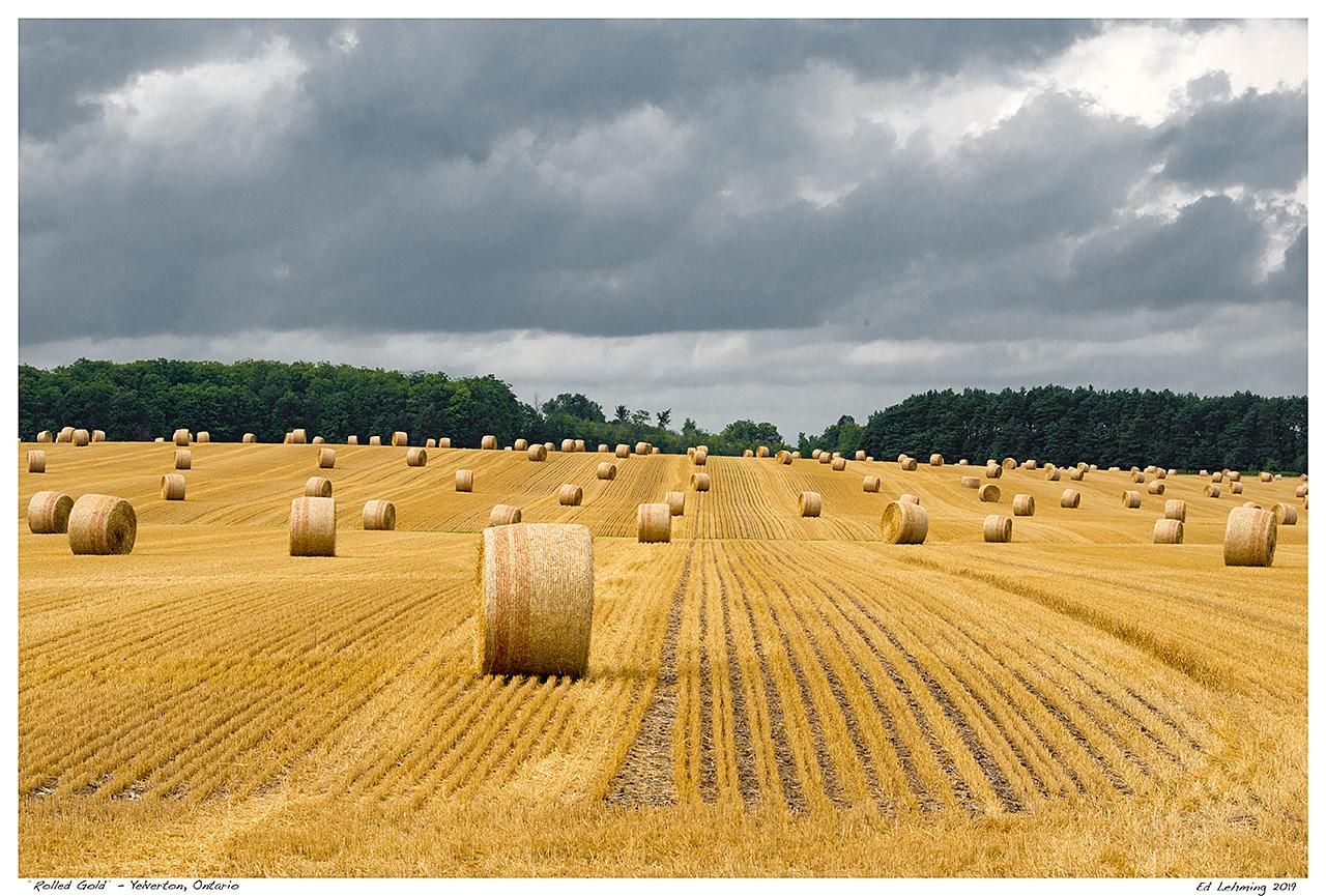 """Rolled Gold"" - Yelverton, Ontario"