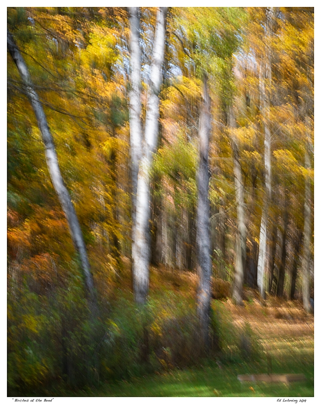 """""""Birches at the Bend"""""""