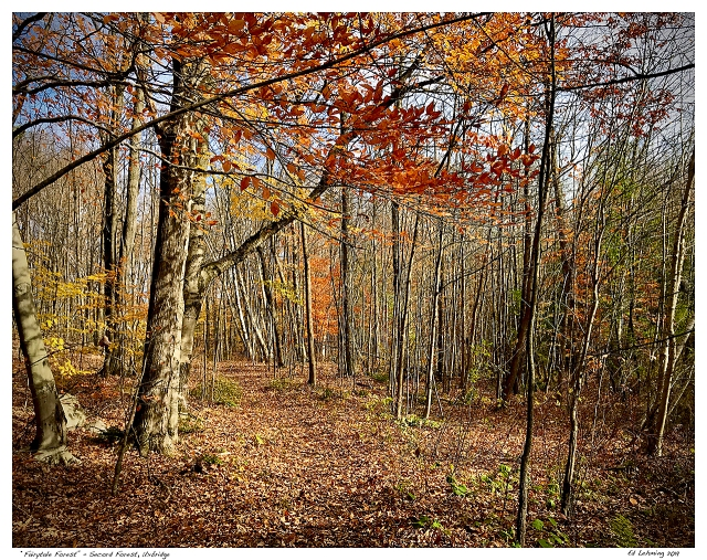 """""""Fairytale Forest"""" - Secord Forest, Uxbridge"""