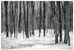 """Shadow Play in the March Forest"""