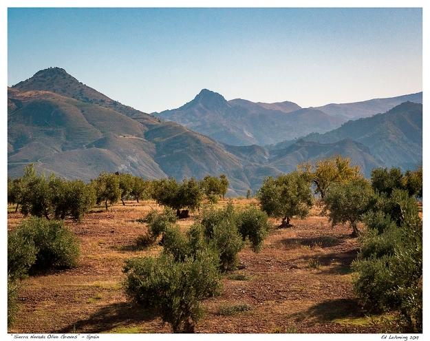 """""""Sierra Nevada Olive Groves"""" - Spain"""